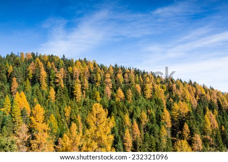 Autumn forest with colorful trees and blue sky, Dolomites Alps, Italy - stock photo