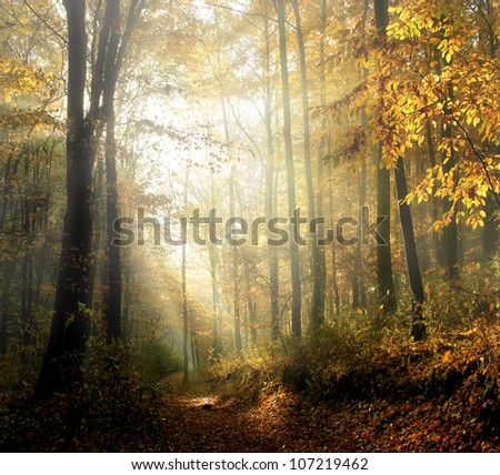 Autumn forest with fog - stock photo