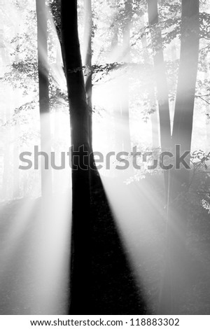 Autumn forest with fog and lights - stock photo