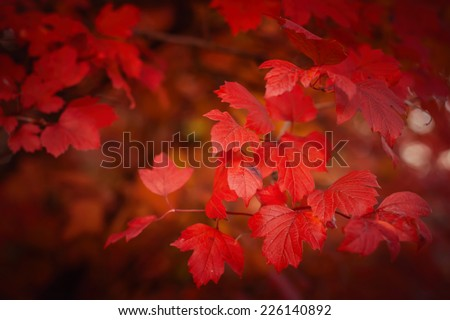Autumn forest with red leafs. Natural background - stock photo
