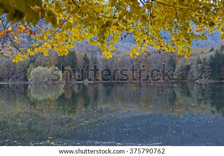 Autumn forest with reflection in water - stock photo