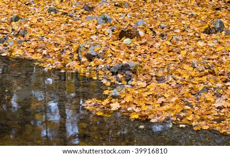 Autumn forest with small brook and orange maple leaves on the ground