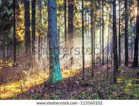 autumn forest with sunshine and fog