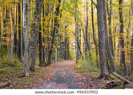 Autumn Forest with Yellow Foliage Leaves
