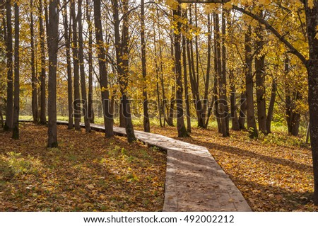 autumn forest with yellow leafs
