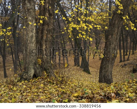 Autumn forest, yellow leaves background  - stock photo