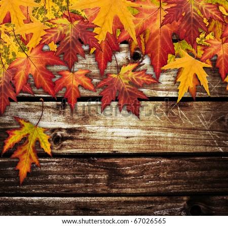 Autumn frame - stock photo