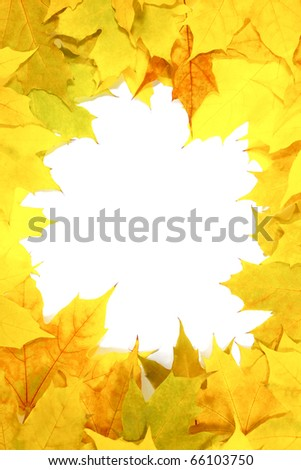 autumn frame leaves