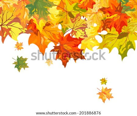 Autumn  Frame With Falling  Maple Leaves on White Background. Elegant Design with Text Space and Ideal Balanced Colors. Vector Illustration.
