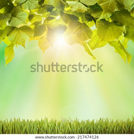 Autumn. Fresh spring green field grass with green bokeh and sunlight backgrounds - stock photo
