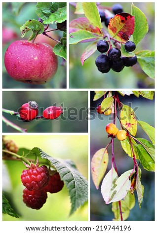 Autumn fruits and berries photo composition - stock photo