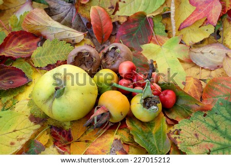 Autumn fruits on autumn leaves - stock photo
