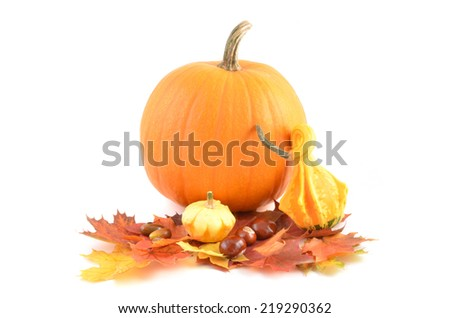 Autumn fruits - pumpkins on autumn leaves. Thanksgiving day decoration.