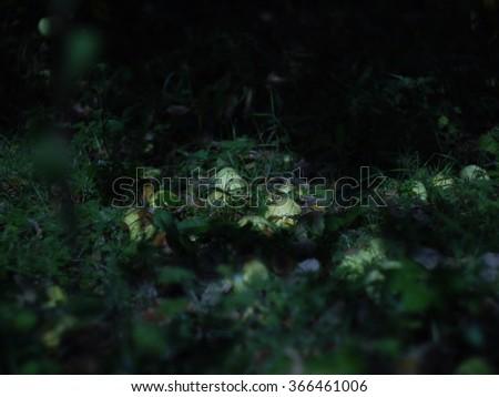 autumn garden in the full moon - stock photo