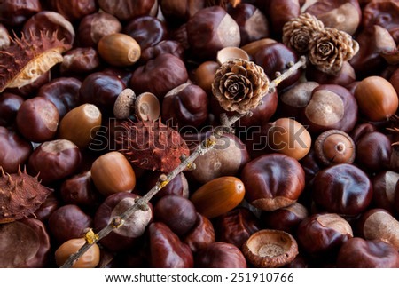 Autumn gifts: chestnuts, fir-cones, acorns - stock photo