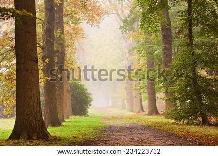 Autumn Glow. Autumn in a foggy day . - stock photo