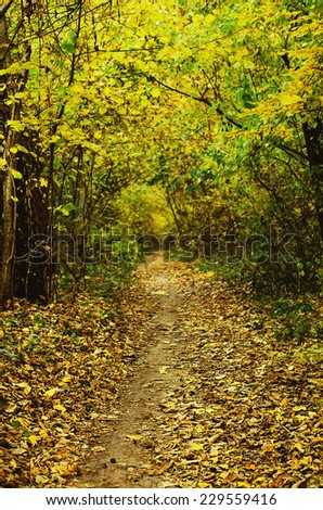 Autumn golden forest with path, natural fall vivid outdoor  background