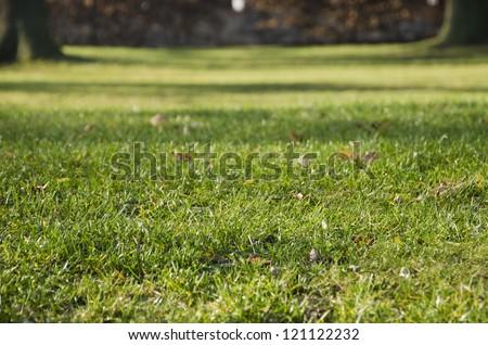 autumn grass, garden - stock photo