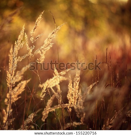 Autumn grass sunset - stock photo