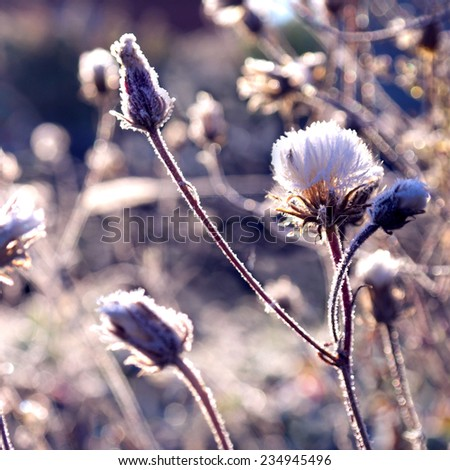 Autumn grass with iniem ice in the rays of dawn - stock photo
