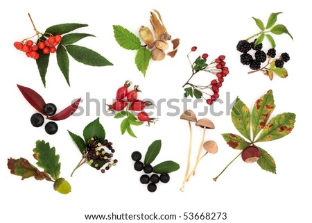 Autumn harvest collection of wild fruit, nuts and berries with leaves, isolated over white background. - stock photo
