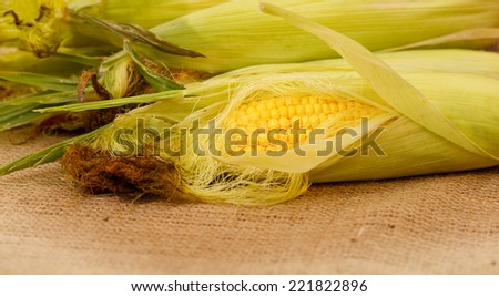 Autumn harvest of corn. Corn lying on the table, place for text or price. Corn on the cob in a rural locality of a harvest. The composition of the ripe ears of corn, agriculture, crop. - stock photo