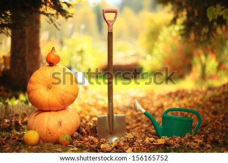 Autumn harvest of pumpkins halloween - stock photo
