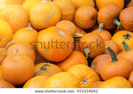 Autumn Harvest of Pumpkins in big wooden boxes on street market.