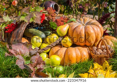 Autumn harvest. Pumpkin apples pears nuts viburnum outdoors in sunny autumn day.