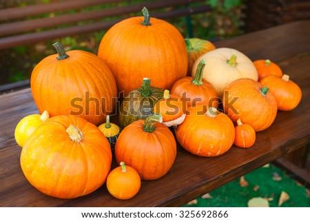 Autumn harvest. Pumpkins on table in garden. Focus on center. - stock photo