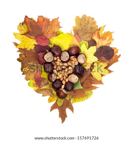 Autumn heart of horse-chestnuts and hazelnuts lying on colorful leaves. Isolated object.