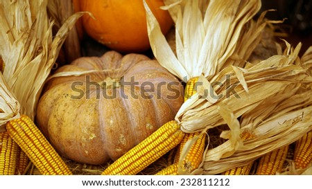 autumn holiday pumpkin and corn, thanks giving theme - stock photo