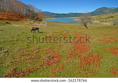 autumn - horse lake green meadow tree