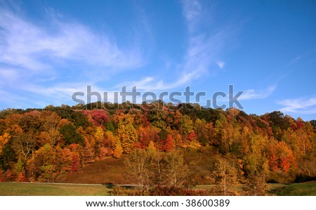Autumn in Allegheny forest