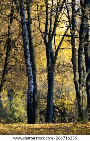 Autumn in city park - stock photo