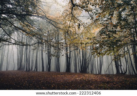 autumn in foggy forest - stock photo