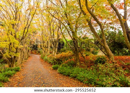 Autumn in forest at Japan - stock photo