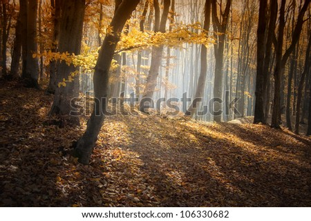 autumn in forest with beautiful light - stock photo