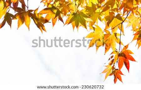 Autumn in Hokkaido, Japan - stock photo