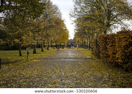 Autumn in London. As autumn comes to an end carpets of autumn leaves cover the ground and get saturated by the rain.