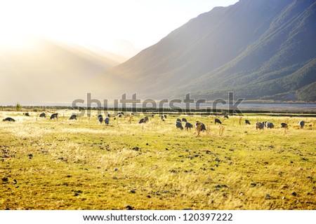 Autumn in New Zealand - stock photo