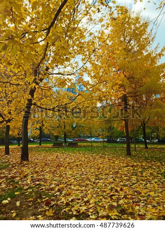 Autumn in Park Presnya. leaves and maples, Moscow, Russia.