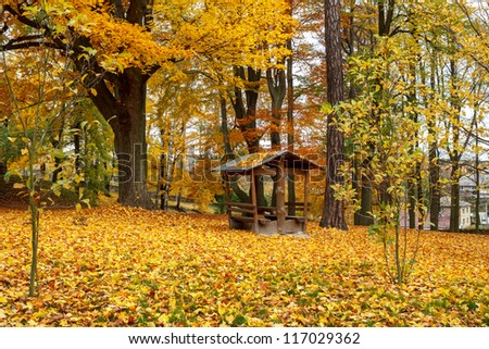 Autumn in park with fallen yellow leaves on ground