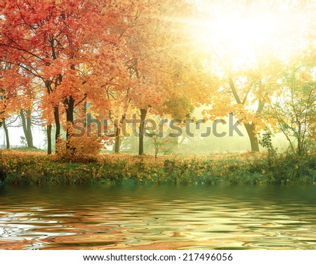 autumn in sunny forest on a river, natural background - stock photo