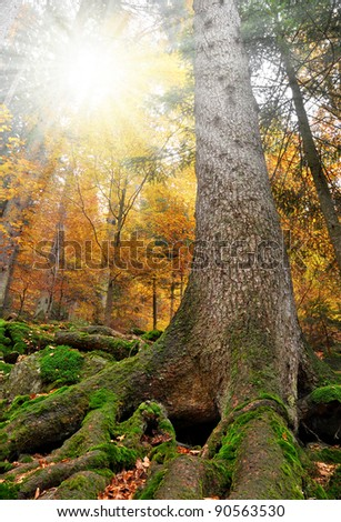 Autumn in the Bavarian Forest National Park - Germany - stock photo