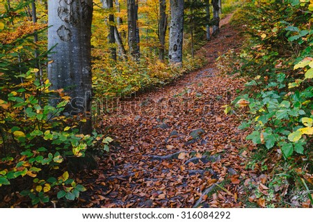 Autumn in the forest. Landscape with footpath. It's a nasty day - stock photo