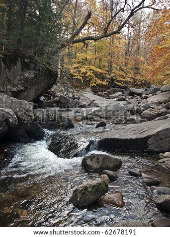 Autumn in the forests of New England by the stream