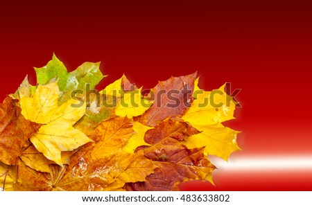 Autumn in the oak forest. autumn colored leaves. golden autumn is bright, warm and a little sad