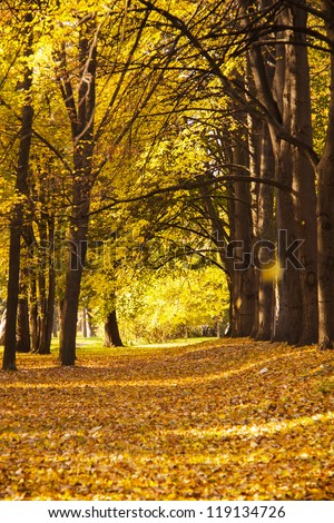 autumn in the park, a lot of leafs on the ground - stock photo