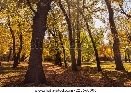autumn in the Park yellow and green leaves shade from trees and sunshine of an autumn forest in the forest sun